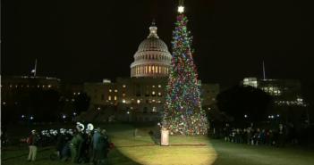 Noble Fir at US Capitol