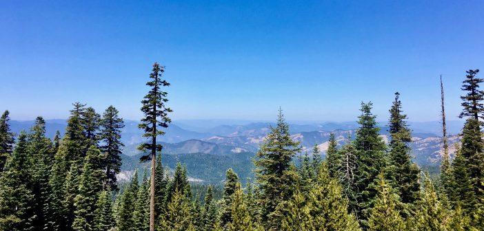 U.S. Forest Service Recognizes Oregon's Leadership Toward Improving Forest Health